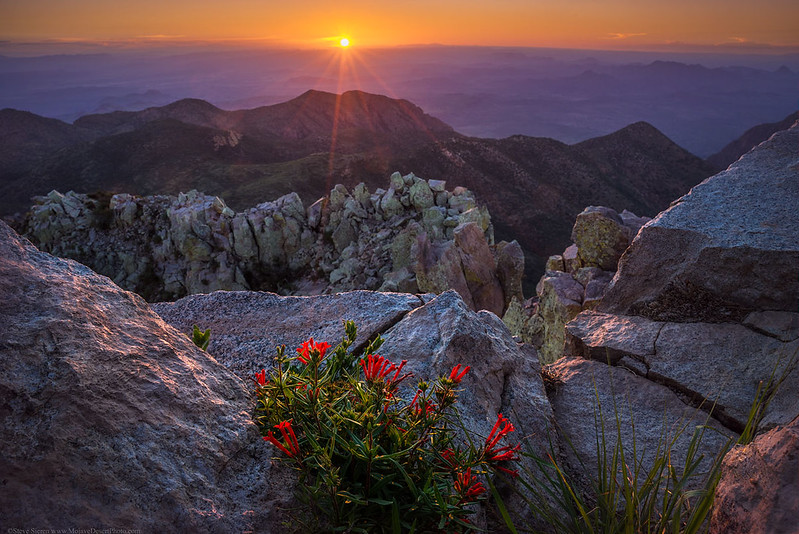 Emory_Peak_Wildflowers_Sunset_Texas_Big_Bend_National_Park_DSC2161.jpg