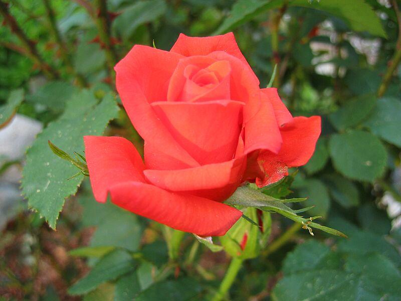 garden-2002-06-0064_std.jpg