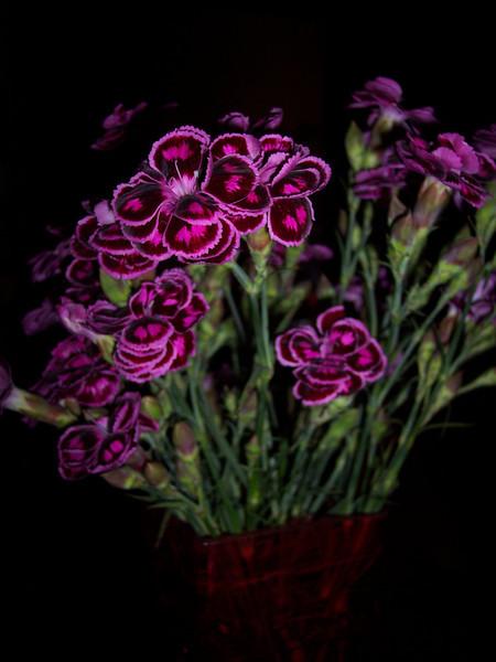 CR_FlowersButterfly.JPG