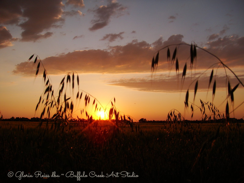 Wild Oats and the Sunset