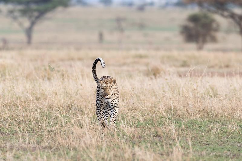 Africa - 101616 - 5327.jpg