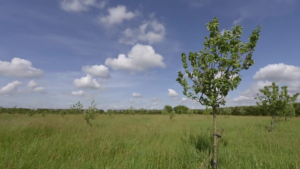 Videos of the Willingham Community Orchard