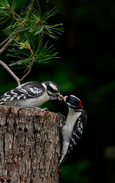 Birds, Chipmunks and Raptors