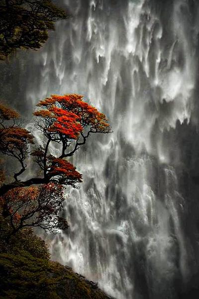 dsc_154 yn AR NZTree + Waterfall PS- +++++.jpg