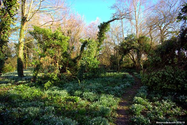 Snowdrop Garden 2014