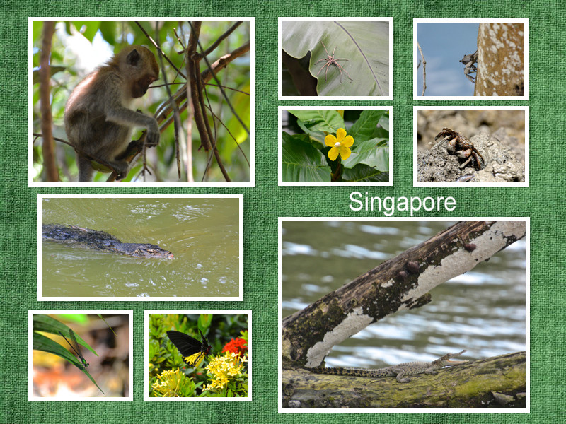 singapore-flora-fauna.jpg
