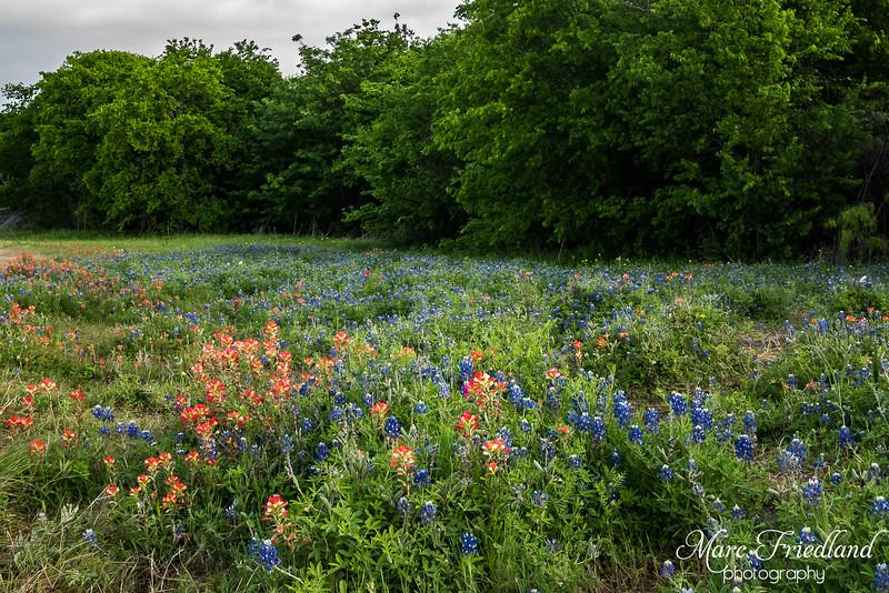 Ennis Bluebonnet Trail
