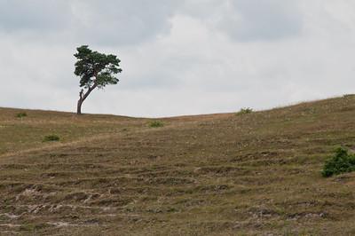 Skåne 2010