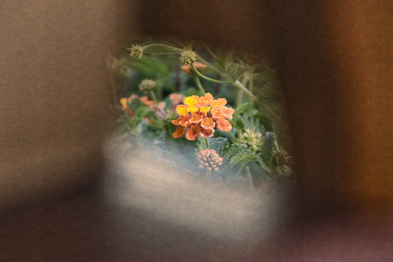 may 29 - Flower in a frame.jpg