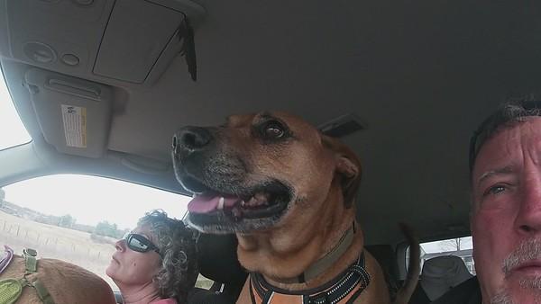 Dulin Dogs at Woodsom Farm 3-31-2021