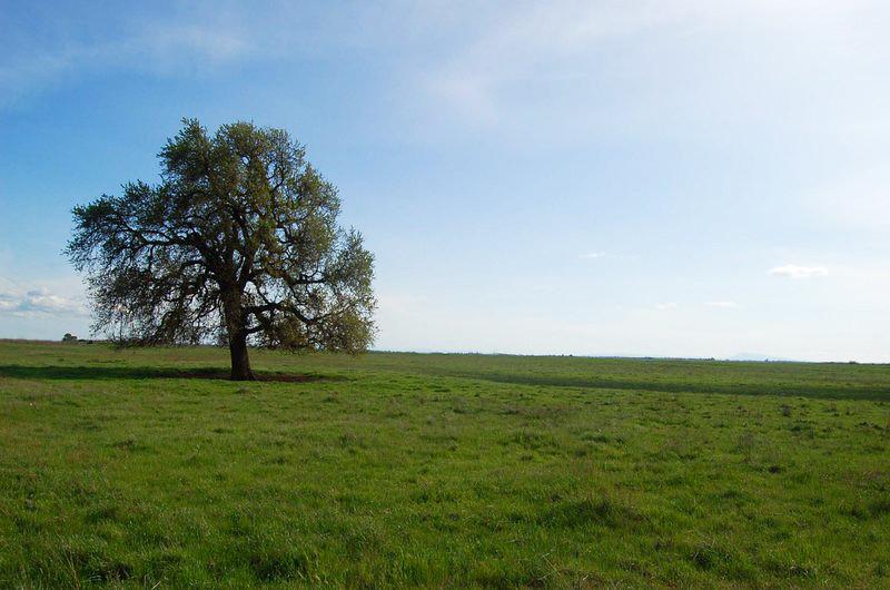 dreaming_tree_by_victorg6546.jpg