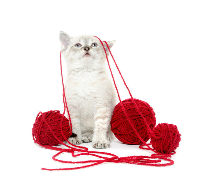 Cute kitten with yarn