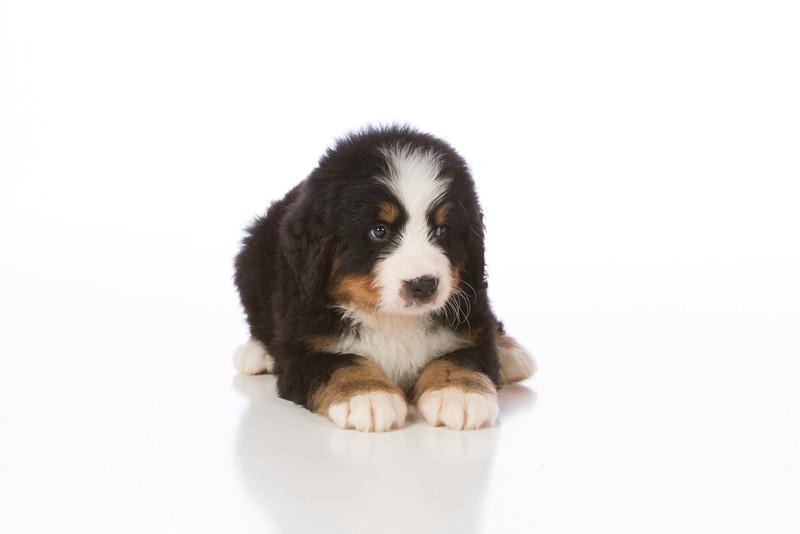 2013-Pearson Pups-Jun02-0235.jpg