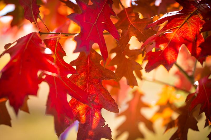 20151024-Fall Colors-71.jpg