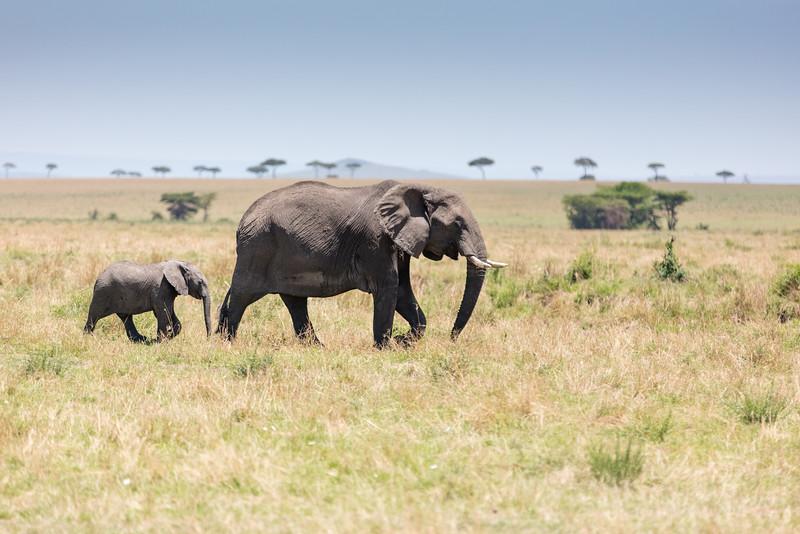 Africa - 101416 - 2470.jpg