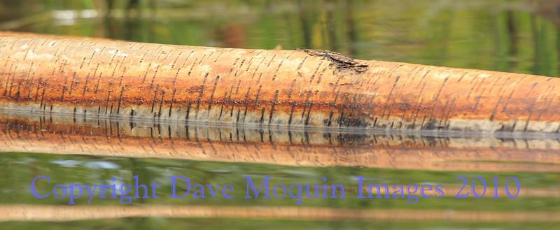 Trees & Bark