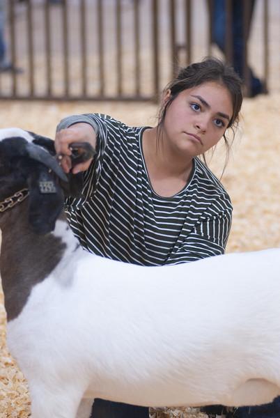 kay_county_showdown_goats_20191207-176.jpg