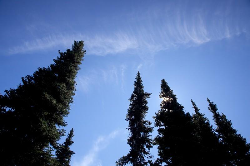 Fir trees and sun. Mount Rainier National Park, Washington.