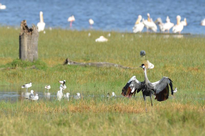 East Africa Safari 104.jpg
