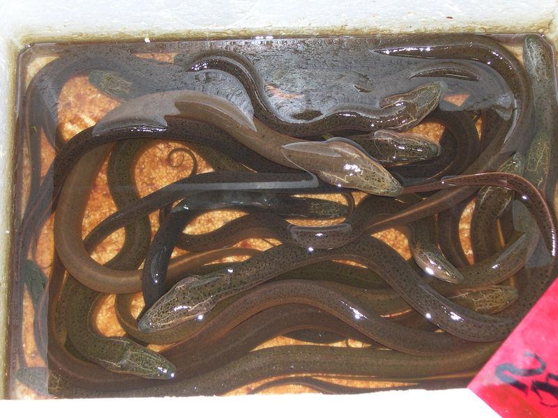 I'm feeling a little 'eel'
