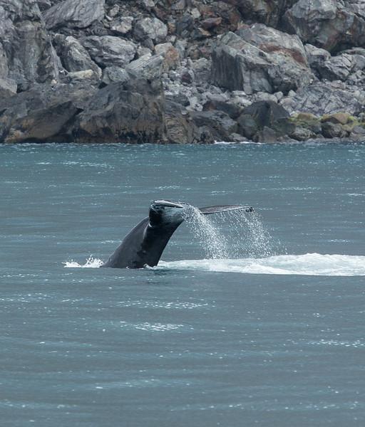 Whale tail 3.jpg
