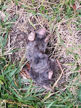 Trapping moles!