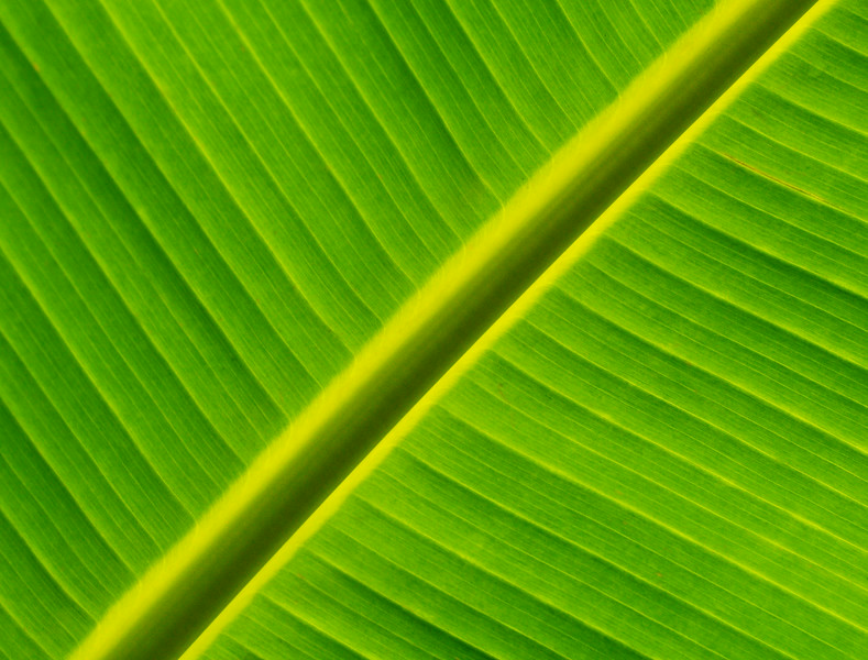 Leaf Illuminated