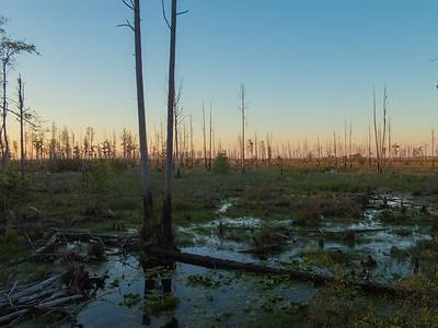 Okeefenoke Swamp and Jacksonville Beach Trip