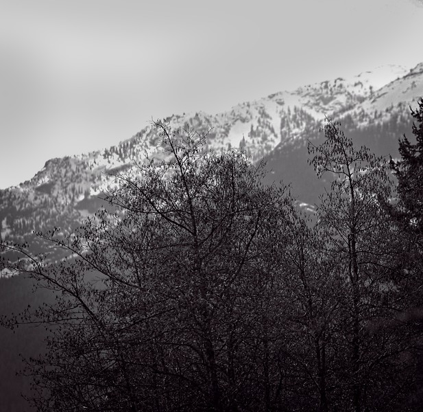 mountain range with tree.jpg
