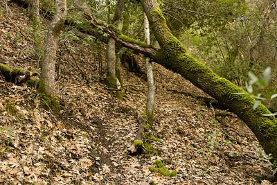 Trees 2013-01-31 Mile Trail