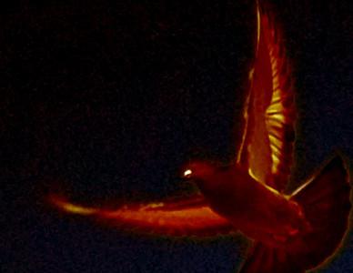 Mike Gilbert - light thru wings - 4