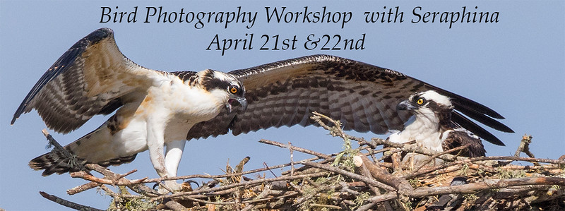 Bird Workshop Header.jpg
