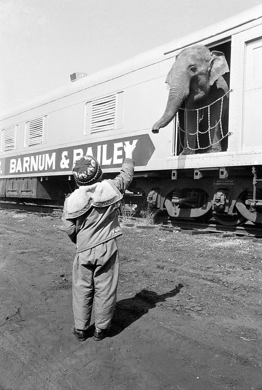 . Brain Hayes, 5, greets one of the elephants that arrived aboard the circus train for a week stand in Philadelphia on March 29, 1966. (AP Photo/Warren M. Winterbottom)