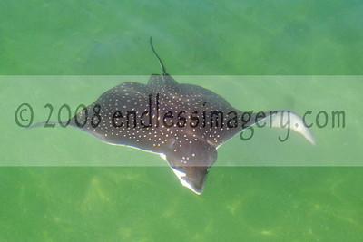 2008 Pompano Beach Saltwater Shootout Express Weigh-In