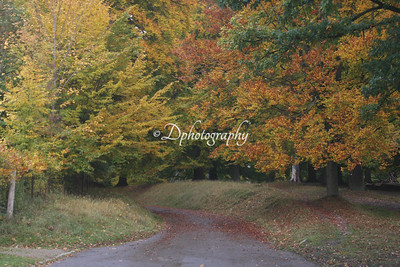 241016  The Deer Park (Dyrehaven)