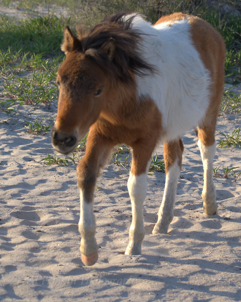 Young horse 3 05_01_18.jpg