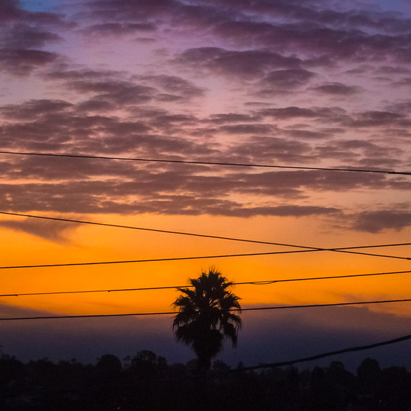 October 11 - Sunrise with wires and a palm tree, Los Angeles, CA.jpg