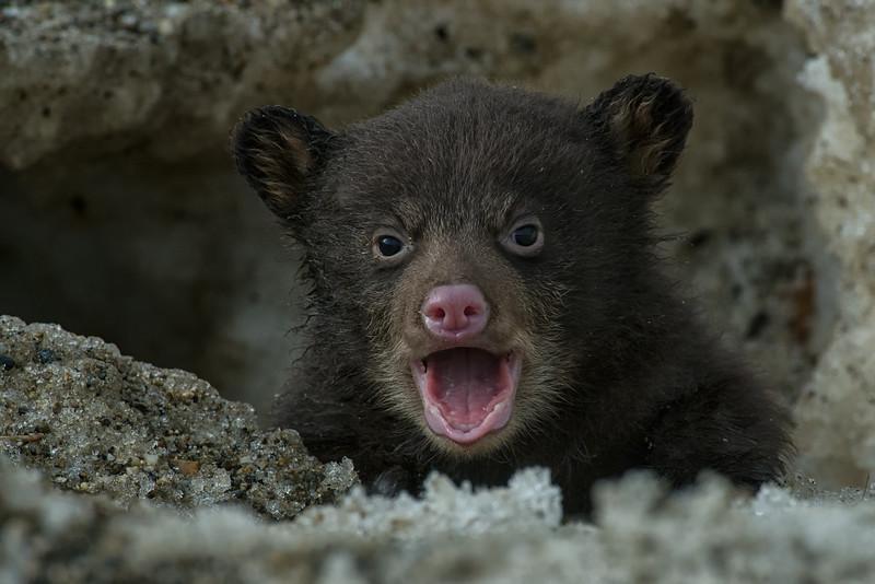 Bear Cub001.jpg