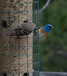 Birds in Dave's yard