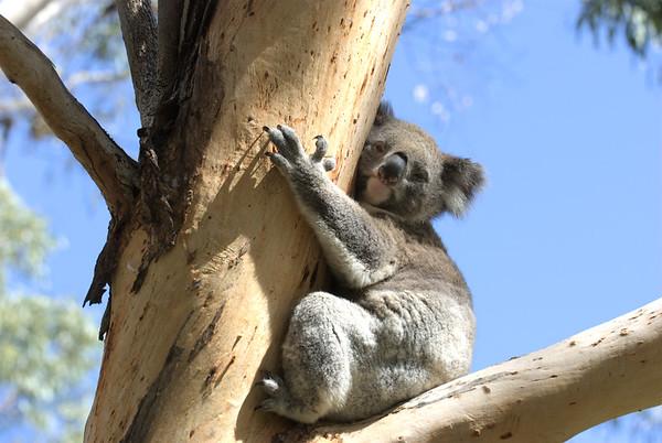 Aussie Creatures