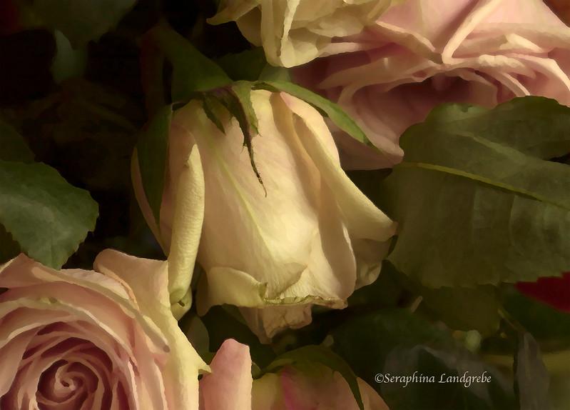 DSC_0986 Old Roses b.jpg