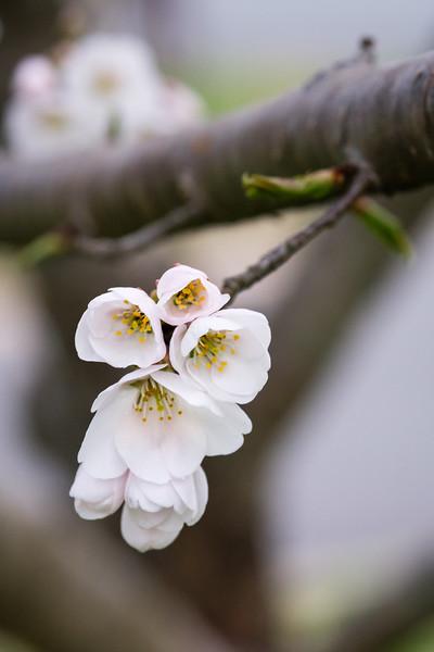 Flowers033019-1212.jpg