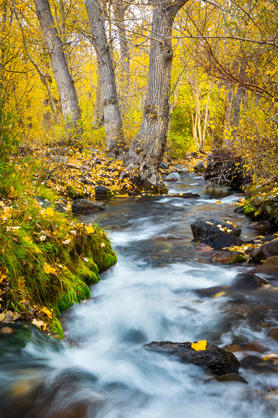 McGee Creek in the fall