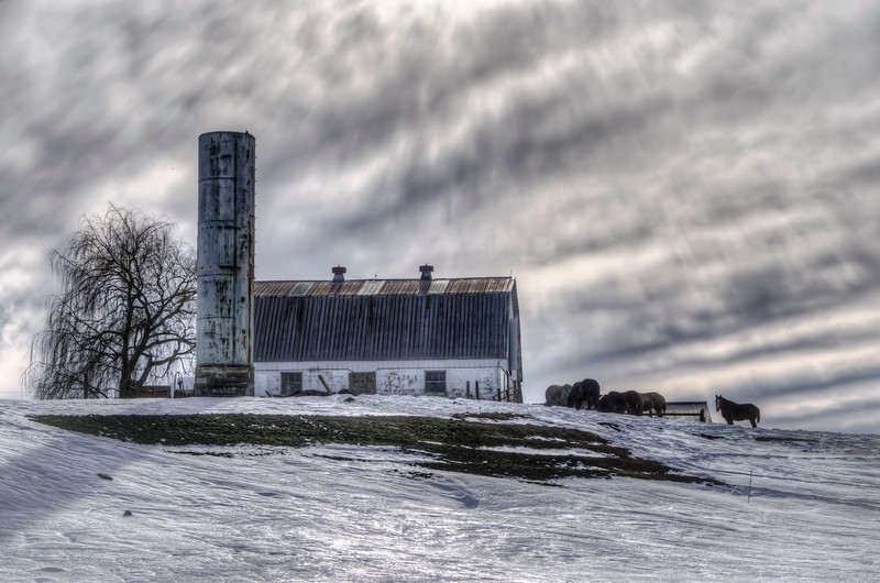 snow 2016 - horse, barn, tree on the hillside(p).jpg