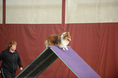 Princeton Dog Training Club AKC Agility Trial September 17-18
