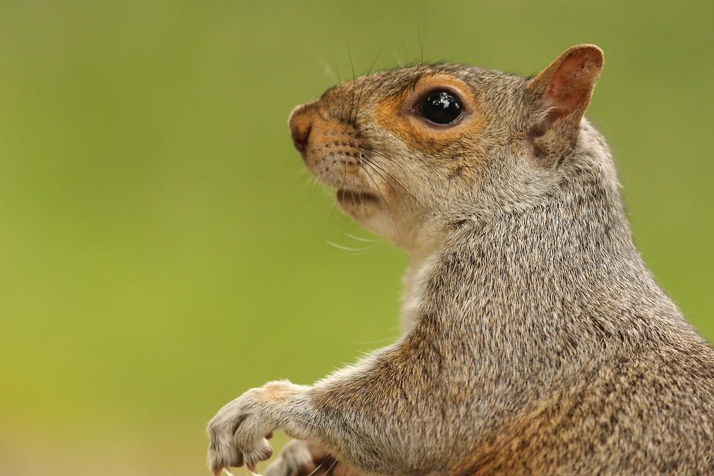 A squirrel at Elizabeth A. Morton National Wildlife Refuge. Elizabeth A. National Wildlife Refuge, Sag Harbor, NY.