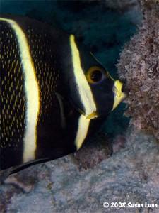Bonaire 2008 (Susan)