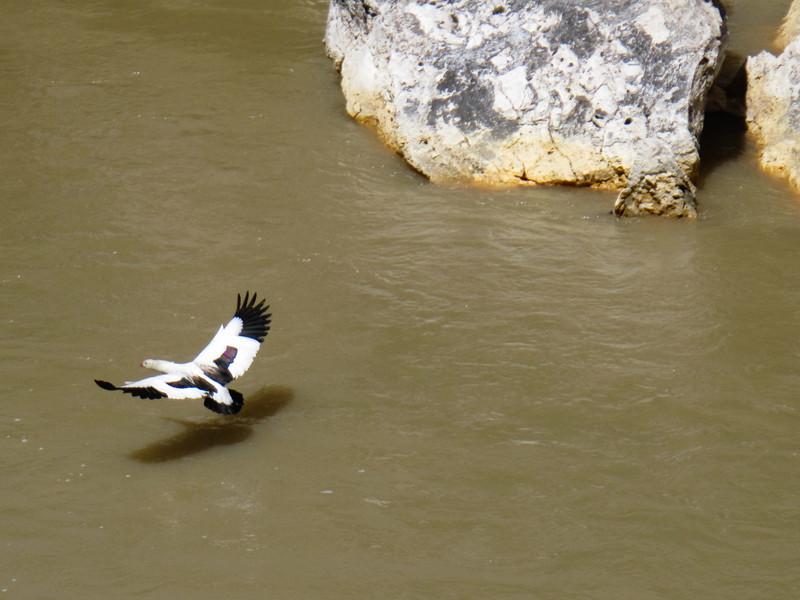 Wildlife at the Geyser
