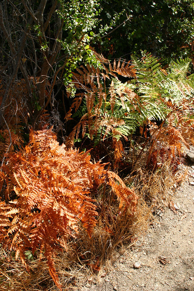 Some ferns along the path, fading for the winter. This is not the fault's fault.