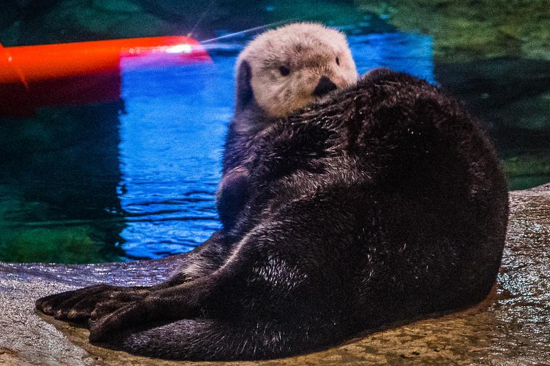 GA Aquarium with Linc, Ali & Abe-162.jpg